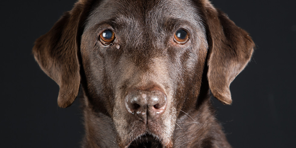 Pop-up Dog Photography Studio at The Bell at Selsey, Saturday 2 March