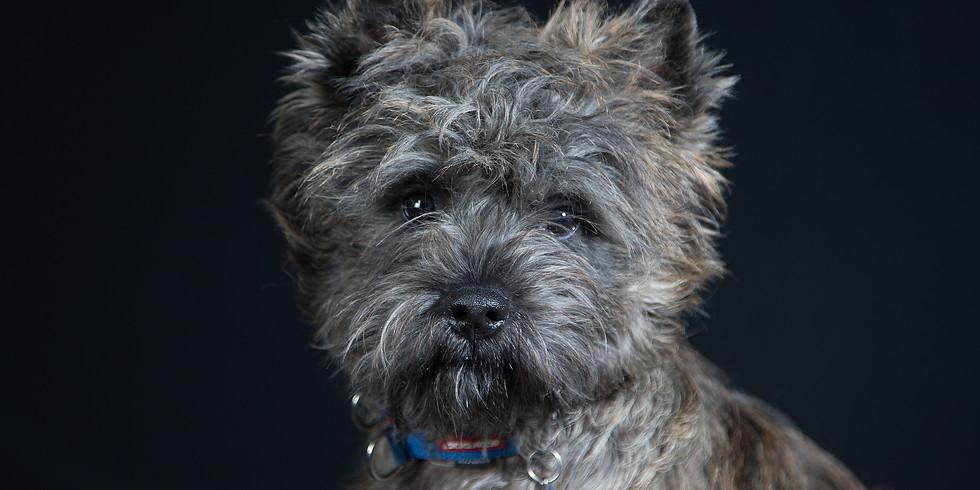Cairn Terrier Relief Fun Day