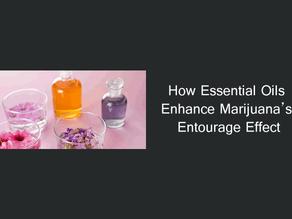 How Essential Oils Enhance Marijuana's Entourage Effect