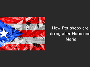 How Pot Shops are doing after Hurricane Maria