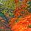 Thumbnail: Westonbirt Arboretum 2, Gloucestershire
