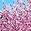 Batsford Arboretum - Andy Walker