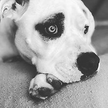 Beautiful girl #dogsofinstagram.jpg