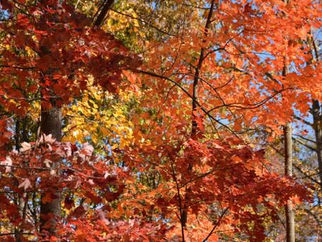 fall-mtnebo1.jpg