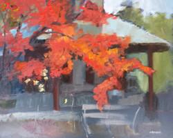 Autumn, Washington Grove