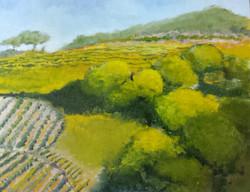 Vineyard, Provence.jpg