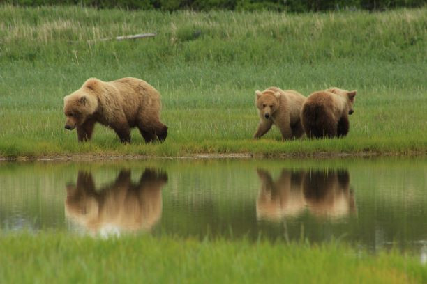 mom with cubs reflections small.jpg