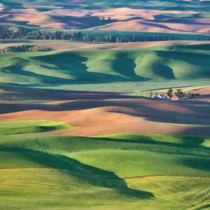 Even More Colors of the Palouse