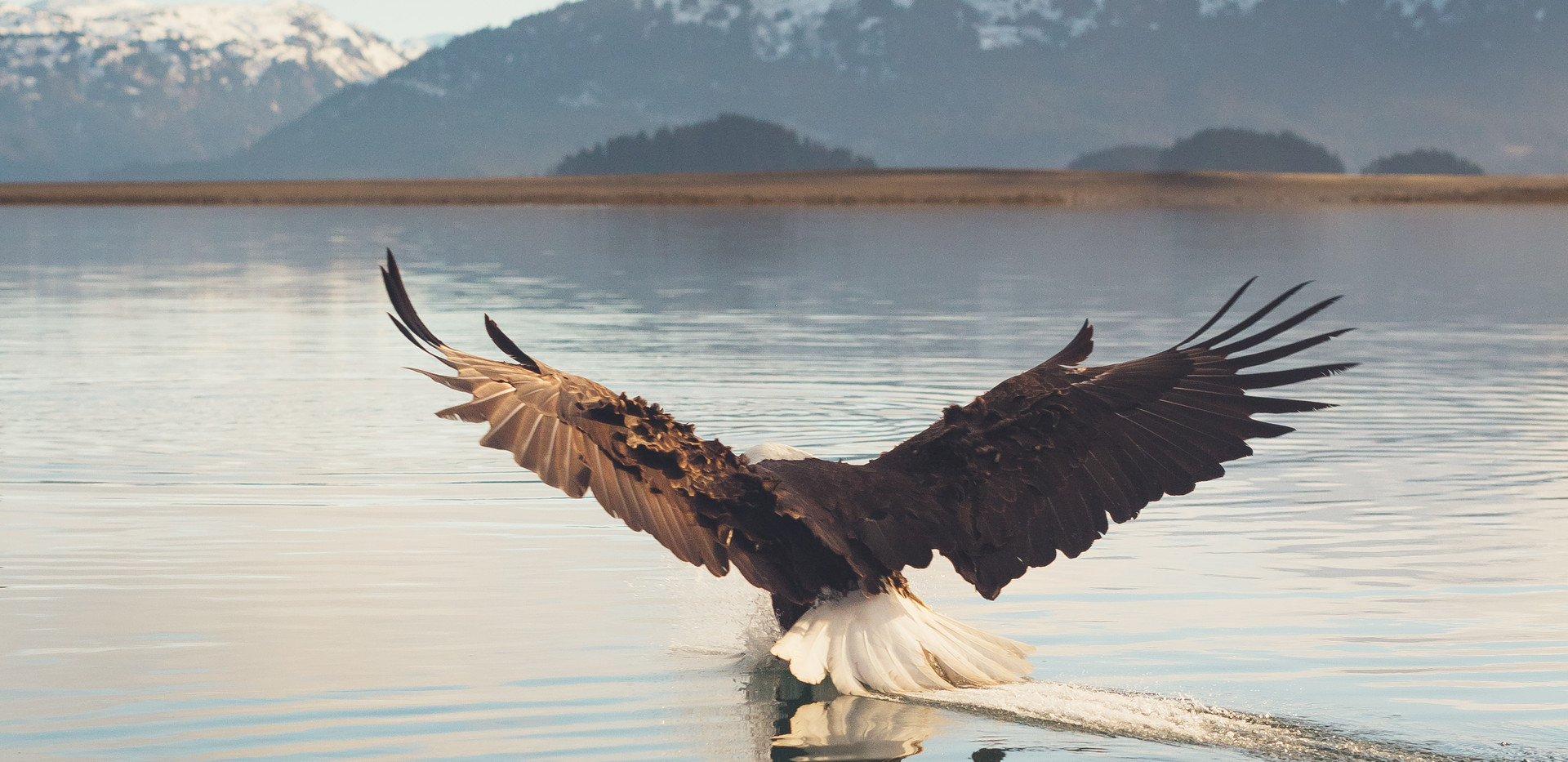 eagles.products-19.jpg