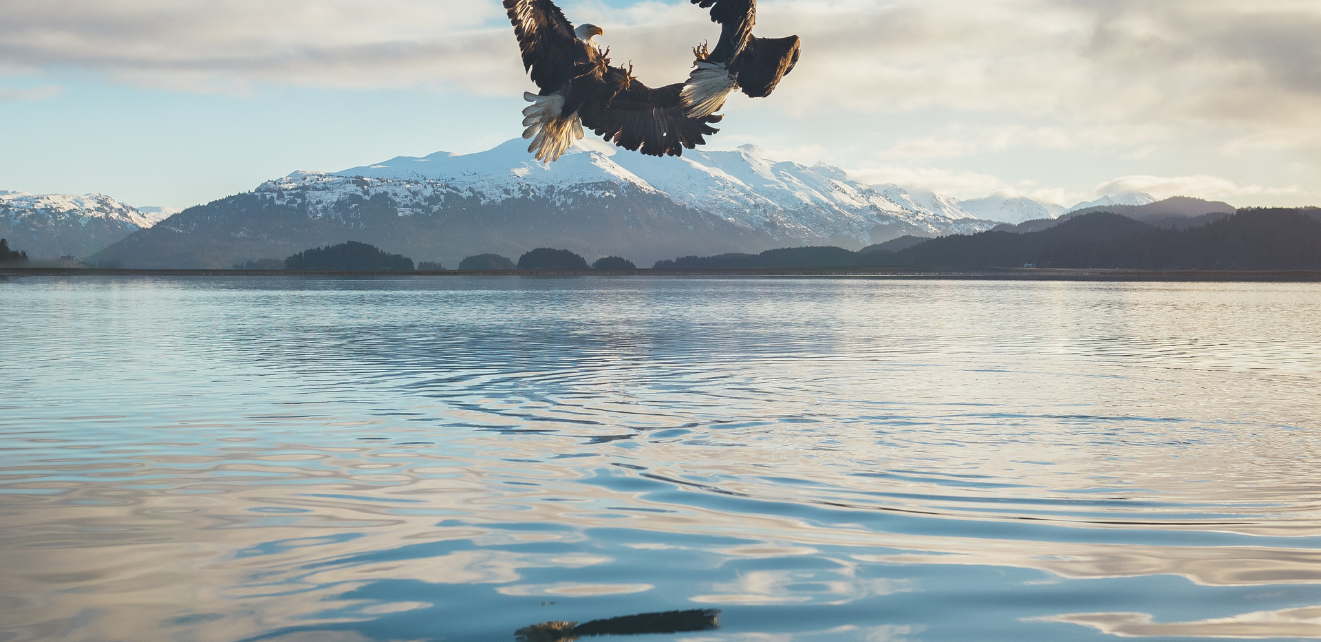 eagles.products-11.jpg