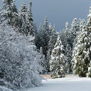 Sierra Snowfall
