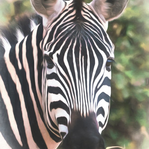 Tanzania Striped Wonder
