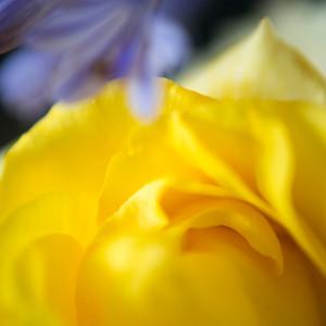 Summer's Happy Yellow