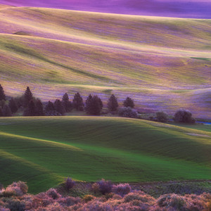 More Colors of the Palouse
