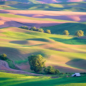 The Colors of the Palouse