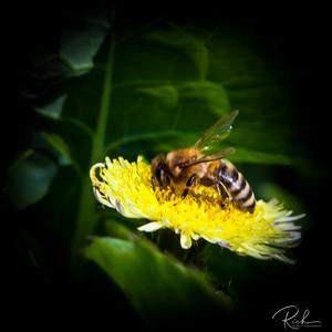 Like I Said About Bee Shots