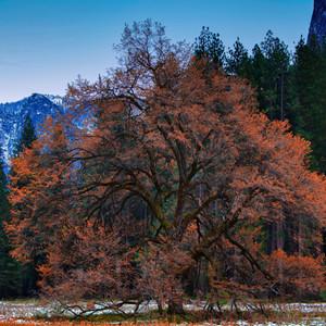 Fall in Cooks Meadow Yosemite