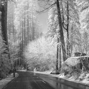 Inviting Yosemite Drive