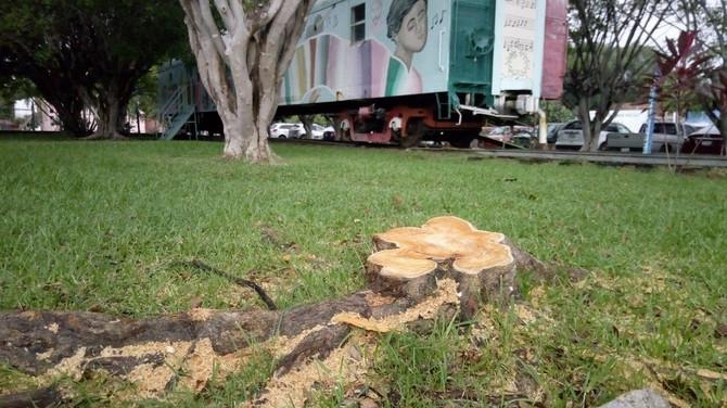 Fotogalería: Talan árboles de Casa de la Cultura