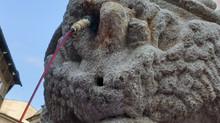 Lugo Monumental participará en San Froilán haciendo manar vino de la fuente de San Vicente por su 50