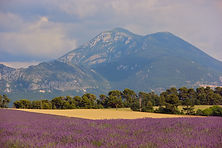 Yoga & Cycling in Provence