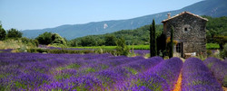 Cycling & Yoga in Provence