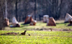 Олений парк