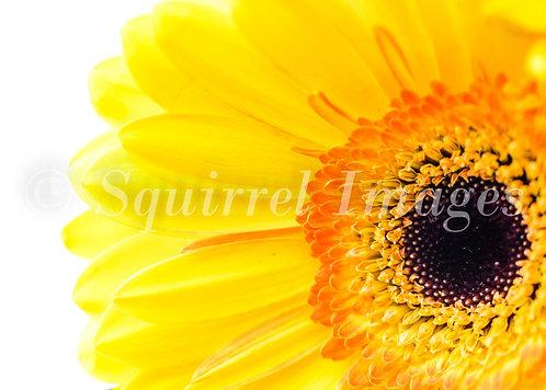 Yellow - Greetings Card