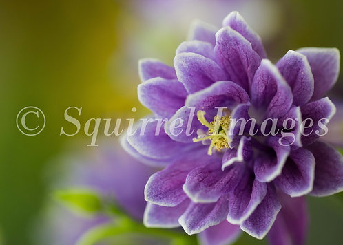 Purple - print