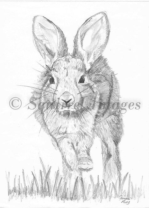 Rabbit - Greetings Card