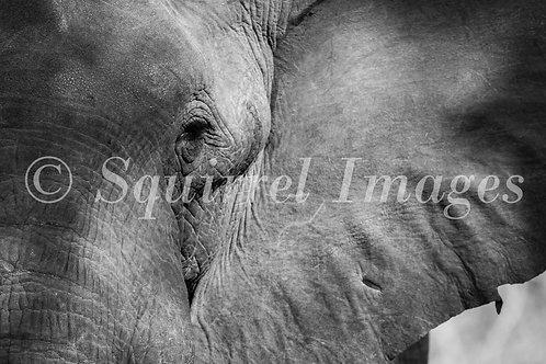 Elephant eye - print