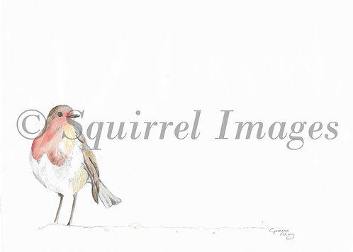 Robin - Greetings Card