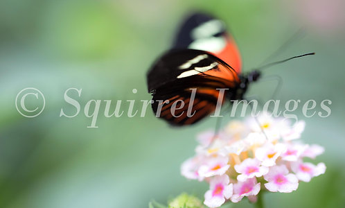 Butterfly blur - Greetings Card