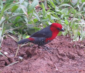 Birding Tour Feb 14th to 28th 2020