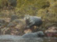 Seals in Barra.jpg
