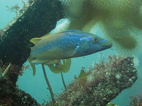 Barra 3.jpg