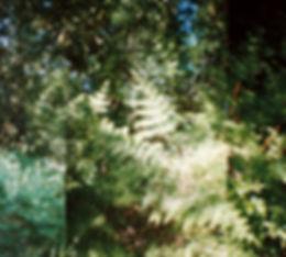 Photo05_5bb.jpg