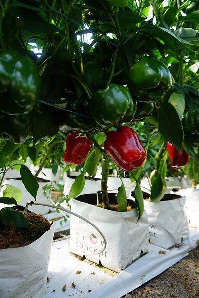 grow pot.jpg