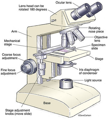 Compound-Microscope.jpeg