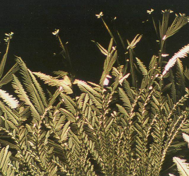 782-08 Wijnsteenzuur, Glycine, AG.jpg