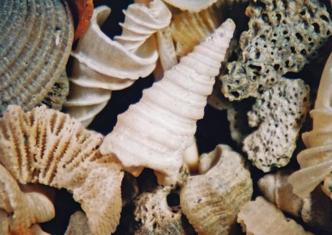 1070-36 Malaysia, Singapore, sea sand, d