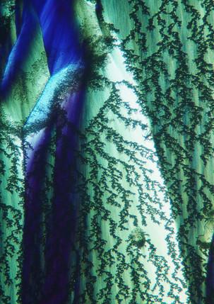 700-50 Waterglas TRIS.jpg