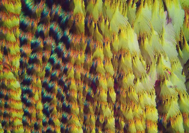510-20 Vitamine C, Stevia.jpg