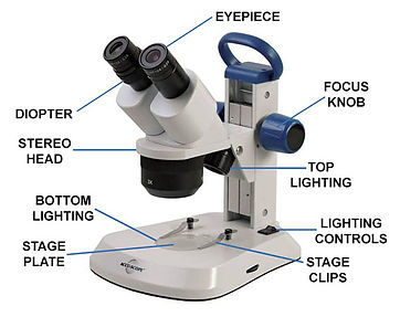 Stereo-Microscope-Parts-Diagram-Size.jpg