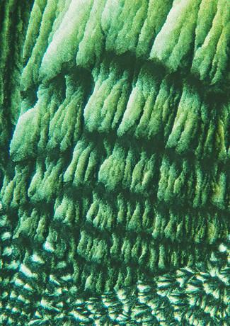 704-29 Sap, Thioureum, Hydrochinon.jpg