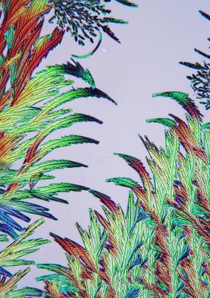 301-09  Eelt tinctuur.jpg