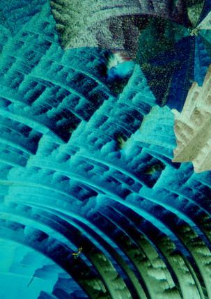 090-11 Eeltverwijderaar.jpg
