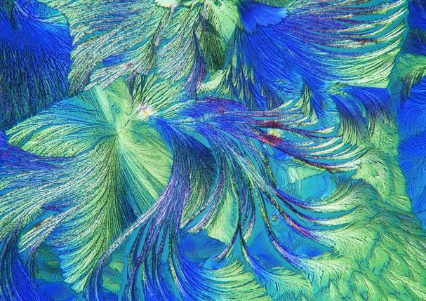 483-02 Hydrochinon, Aquarius.jpg