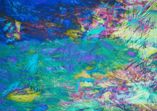 114-09 Stevia Glycine.jpg