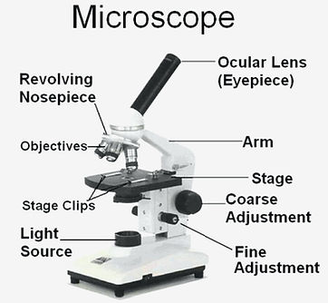 compound-microscope-parts-.jpg